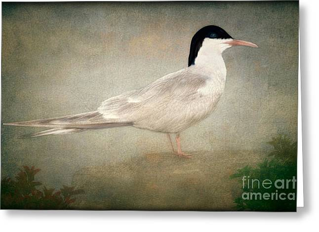 Portrait Of A Tern Greeting Card by Tom York Images