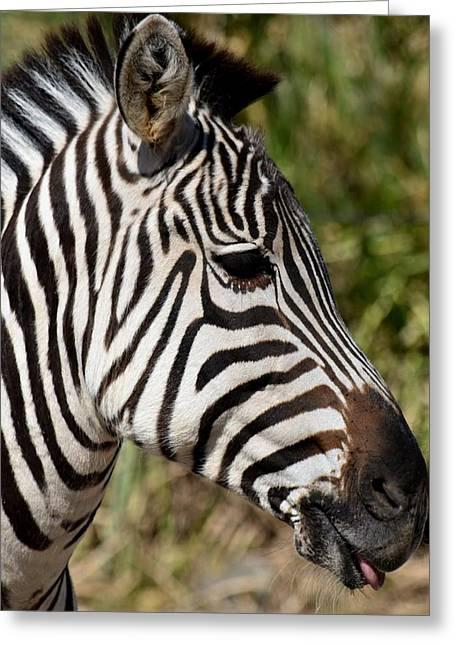 Portrait Of A Zebra Greeting Card by Maria Urso