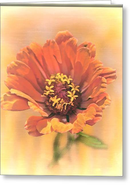 Portrait Of A Zinnia Greeting Card by Larry Bishop