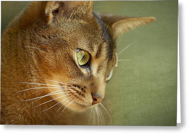 Portrait Of An Abyssinian Cat With Textures Greeting Card