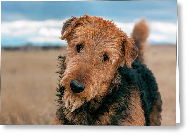 Portrait Of An Airedale Terrier (mr & Pr Greeting Card by Zandria Muench Beraldo