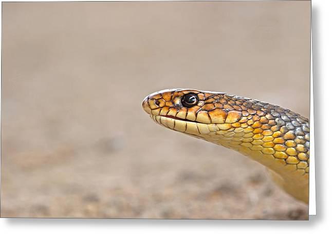Portrait Of An Arrow Snake Greeting Card by Ronald Jansen