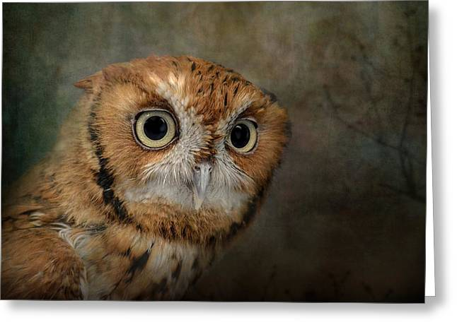 Portrait Of An Eastern Screech Owl Greeting Card by Jai Johnson