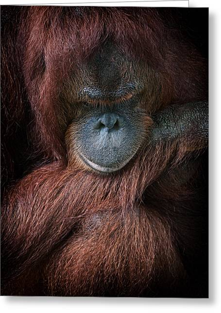 Greeting Card featuring the photograph Portrait Of An Orangutan by Zoe Ferrie