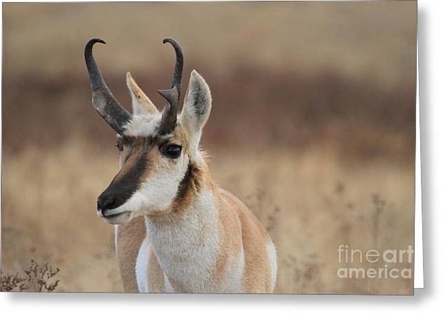 Portrait Of Beauty Greeting Card by Adam Jewell
