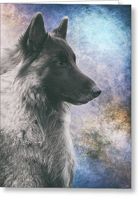 Portrait Of Belgian Tervuren Greeting Card by Wolf Shadow  Photography