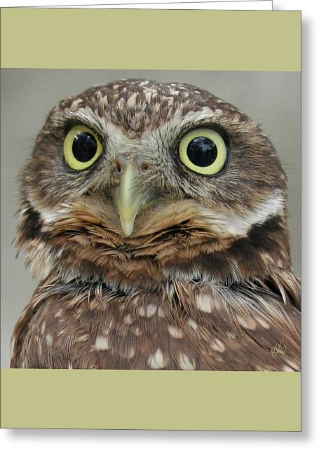 Portrait Of Burrowing Owl Greeting Card by Ben and Raisa Gertsberg