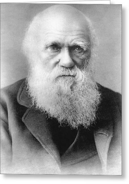 Portrait Of Charles Darwin Greeting Card by Underwood Archives