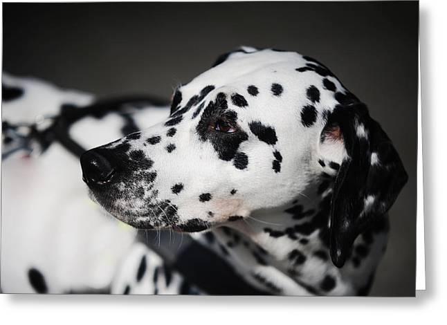 Portrait Of Dalmation Dog. Kokkie Greeting Card