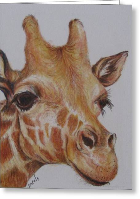 Portrait Of Giraffe Greeting Card