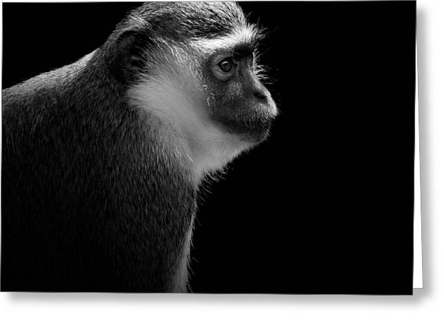 Portrait Of Green Monkey In Black And White Greeting Card by Lukas Holas