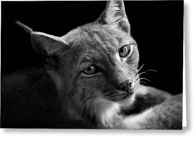 Portrait Of Lynx In Black And White II Greeting Card