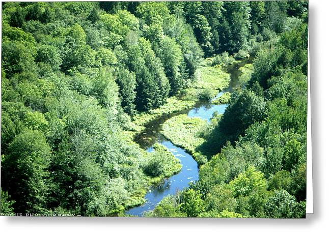 Portrait Of Porcupine River Greeting Card by Meghan Ziegel