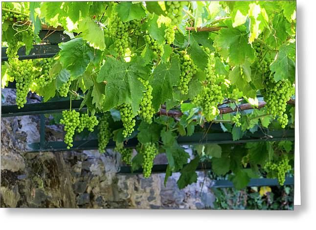 Portugal, Douro Valley, Grapes Greeting Card by Emily Wilson