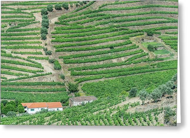 Portugal, Douro Valley, Hillside Greeting Card by Rob Tilley