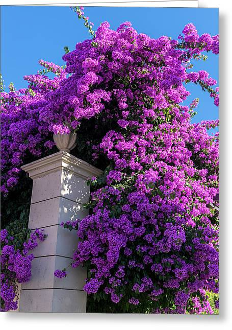Portugal, Pinhao, Bougainvillea (large Greeting Card by Jim Engelbrecht