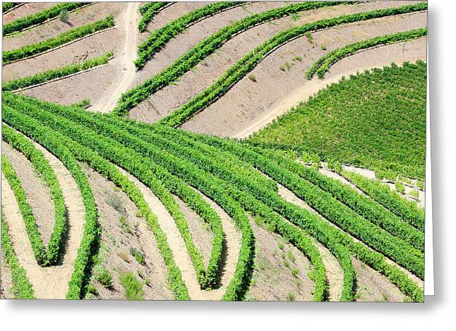 Portugal, Terraced Vineyards Lining Greeting Card