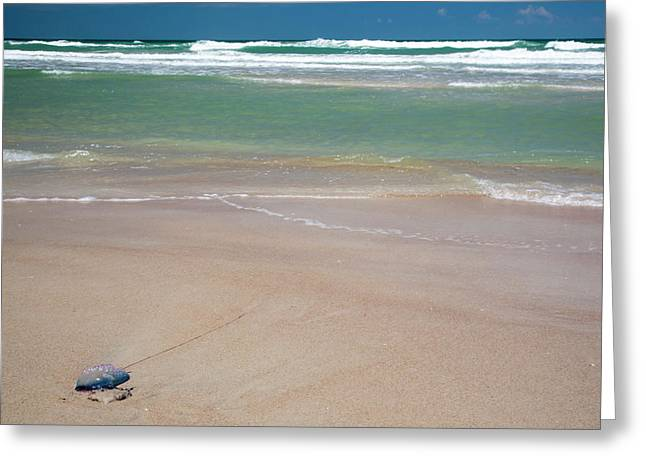 Portuguese Man O' War On A Beach Greeting Card