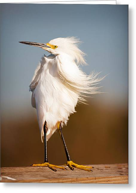 Posing Egret Greeting Card by Tammy Smith