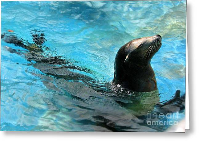 Greeting Card featuring the photograph Posing Sea Lion by Kristine Merc