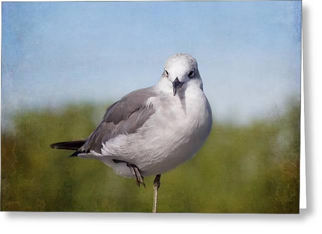Posing Seagull Greeting Card by Kim Hojnacki