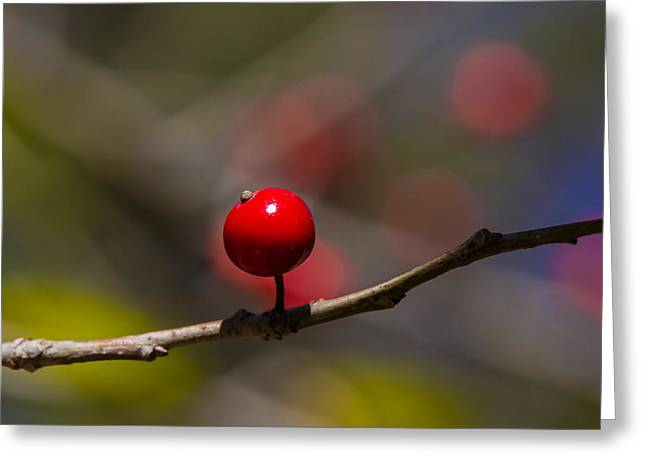 Possumhaw Fruit Abstraction Greeting Card