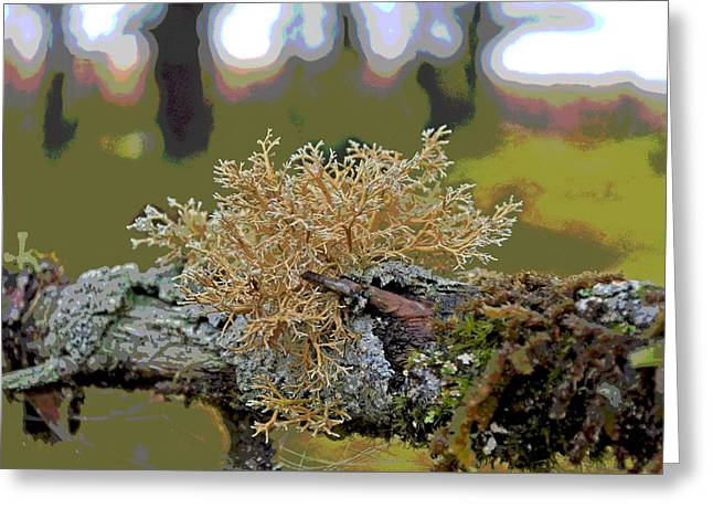 Posterized Antler Lichen Greeting Card
