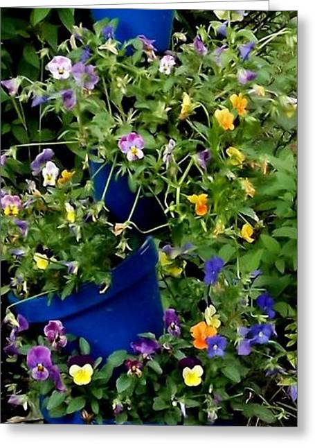 Pot Plant Greeting Card