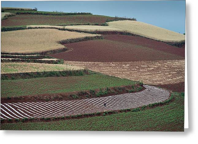 Potato And Wheat Crops Greeting Card