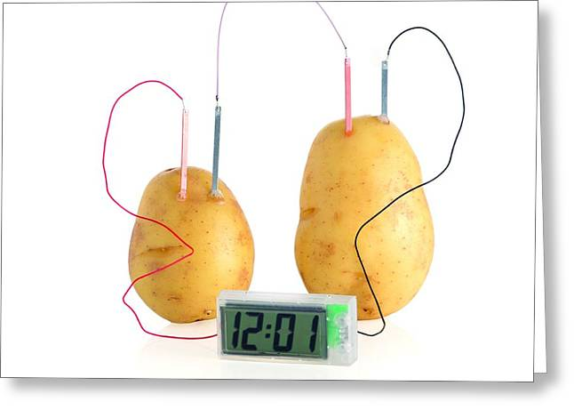 Potato Clock Greeting Card by Science Photo Library