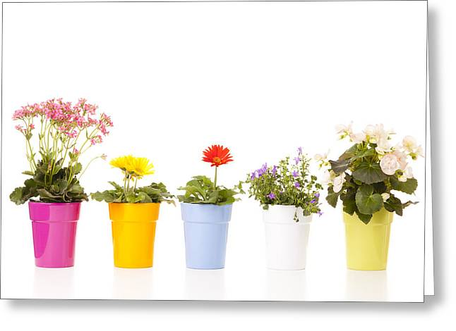 Potted Flowers Greeting Card by Alexey Stiop