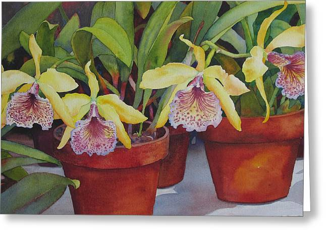 Greeting Card featuring the painting Potted Orchids by Judy Mercer
