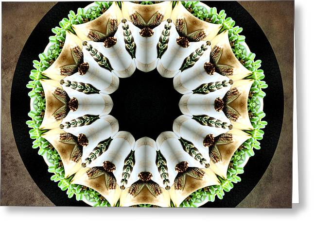 Greeting Card featuring the photograph Potted Plant Kaleidoscope by Betty Denise