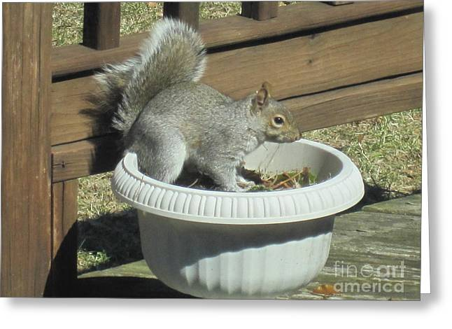 Potted Squirrel Greeting Card by Tara  Shalton