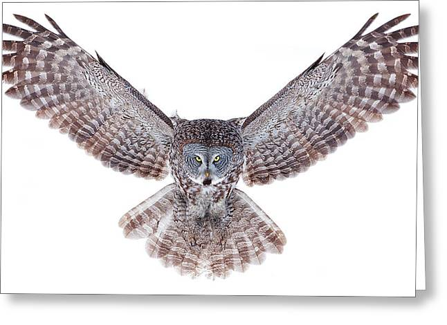 Power - Great Grey Owl Greeting Card