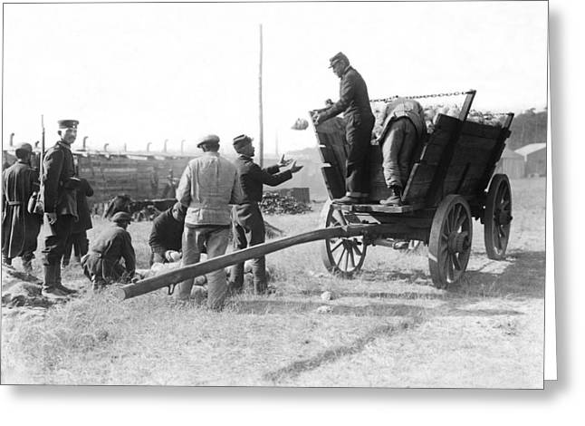 Pows Unload Cabbages For Lunch Greeting Card by Underwood Archives