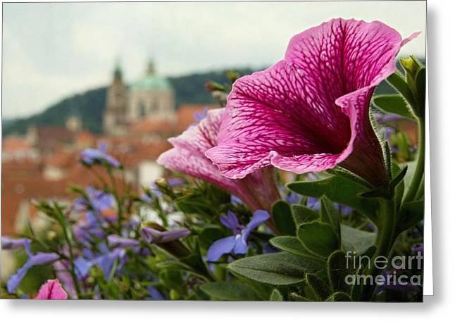 Prague In Bloom Vi - Summer Edition Greeting Card