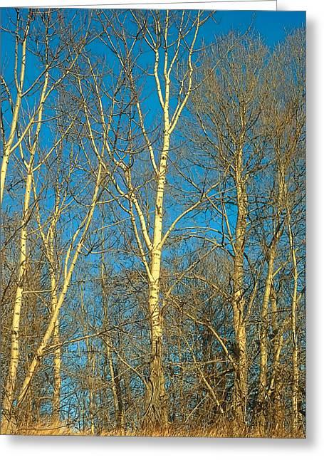 Prairie Autumn 9 Greeting Card by Terry Reynoldson