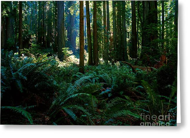Prairie Creek Redwoods State Park 10 Greeting Card