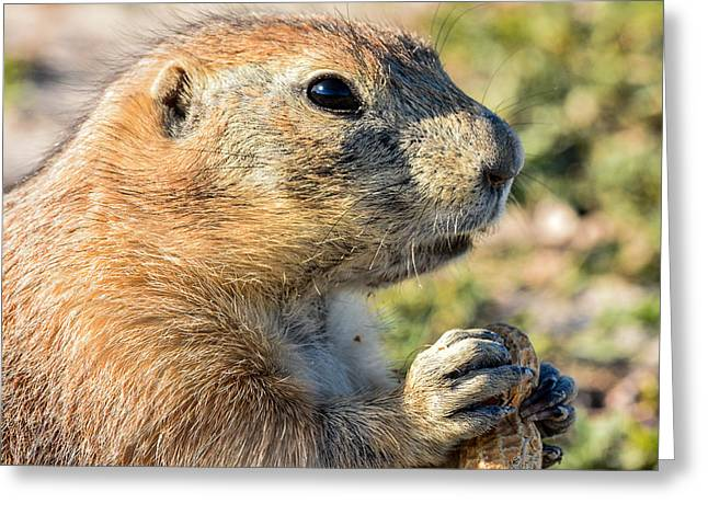 Prairie Dog 2 Greeting Card by Robin Williams