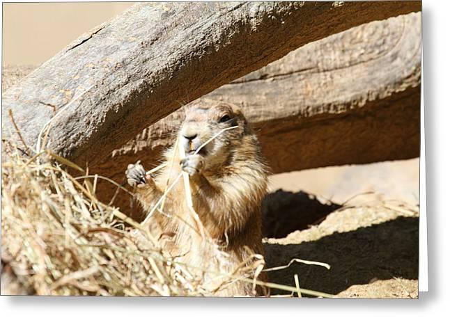 Prairie Dog - National Zoo - 01137 Greeting Card