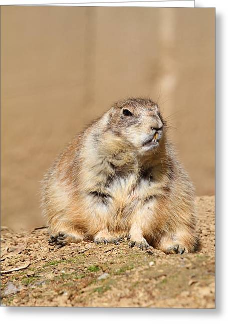 Prairie Dog - National Zoo - 01139 Greeting Card