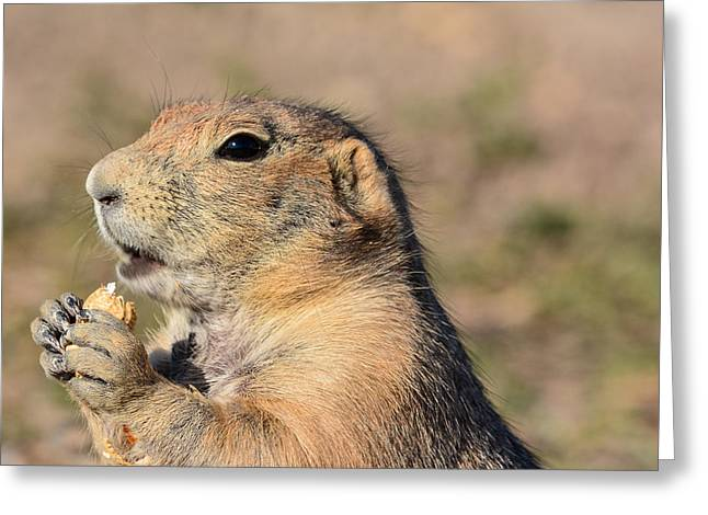 Prairie Dog Greeting Card by Robin Williams