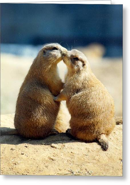 Prairie Dogs Kissing Greeting Card