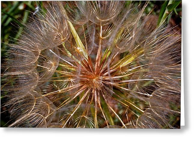 Prairie Flower Or Weed Greeting Card