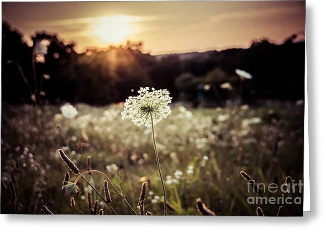 Prairie Lace Sunset Greeting Card