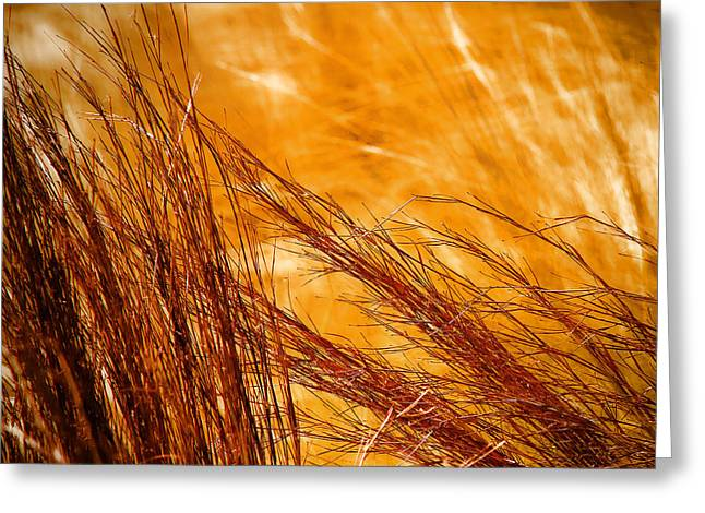 Prairie Winds Greeting Card