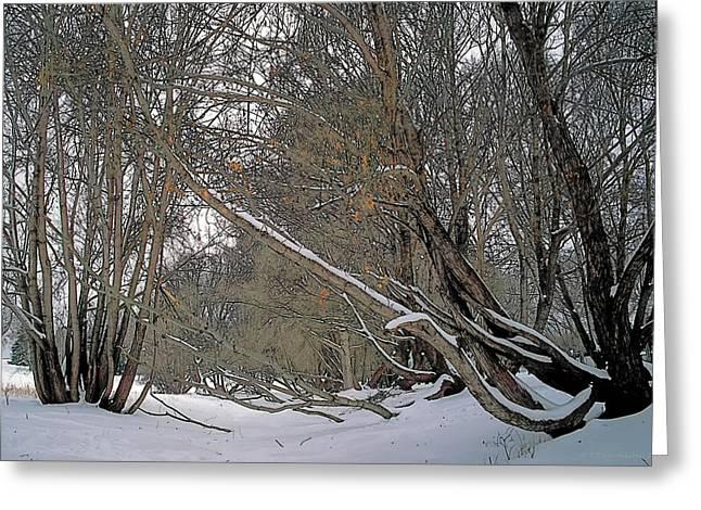 Prairie Winter 2 Greeting Card by Terry Reynoldson