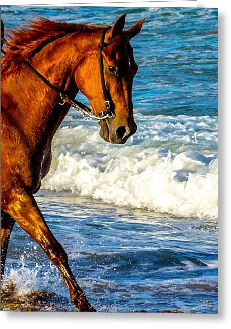 Prancing In The Sea Greeting Card