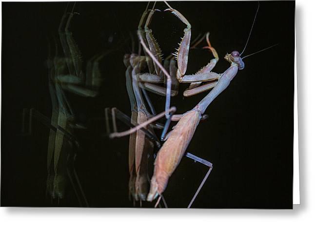 Praying Mantis 2 Greeting Card by Angela A Stanton